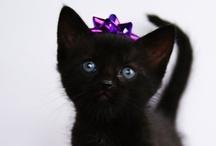 Too Cute :) / by Bernadette Rodgers