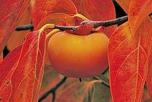 Berries, Fruits, & Seeds / by Chyrele Singletary