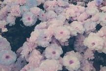 Fanciful Florals / by Marlana Broadway