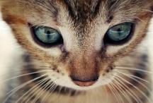 Cats / by Rita Anoffo