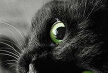 Black cats only  / Angles=Black cats. Gods way to send us Joy  / by Mary Costello