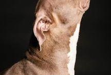 Doggies! / Hunde, Hunde, Hunde!!! :-) / by Renate Schmich