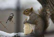 ** ♥ SQUIRRELS ♥ **  / Thank You for following me :-) / by Joke