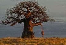 ''Beauty of a tree'' /  10 pin per day limit!  Thank You for following me :-) / by Joke