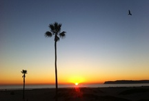 San Diego / I love San Diego.  This is where I now live.  I have to say it's Paradise. / by Davinder Kaur