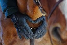 Equestrian♘ / Horsey Stuff / by ➳ Liv Laura ➳
