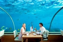 Underwater Wonders / A glimpse into the wonders of the deep blue / by Conrad Maldives