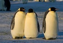 Penguins Theme / by Diane Fangmeyer