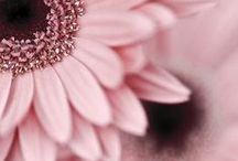 Pink petals / IN LOVE WITH PINK / by Lisa Luna