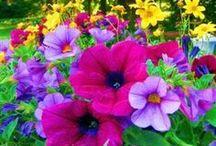 FLORS / Fotos de flors / by Ablanc Coll