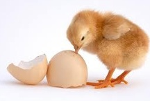 Eggs / Jeremiah 17:11 Like a partridge that hatches eggs it did not lay are those who gain riches by unjust means. When their lives are half gone, their riches will desert them, and in the end they will prove to be fools. / by S P