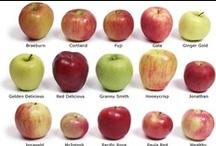 Apples  / by S P