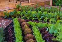 Fresh Produce & Gardening : Dedicated to Backyard Gardens & the Fruits of your Labor / http://www.juicers-best.com / by Juicers Best