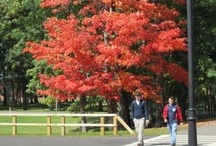 Fall/Winter @ Bonaventure / by St. Bonaventure University Alumni