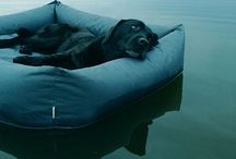 Pamper | Pets / Indoor and outdoor furniture and accessories for the pampered pet #lovemypets / by Great Ponds & Gardens