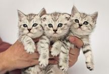Beautiful Cat Pictures!! / I ♥ cats / by Phoenix Indigo Ember