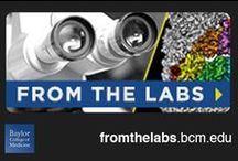 From the Labs / Read more about research at Baylor College of Medicine in our monthly newsletter From the Labs: http://fromthelabs.bcm.edu/. / by Baylor College of Medicine