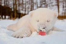 Cute Animals / by Breeanna Robinson