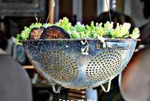 How does your garden grow? / An imaginary Pinterest garden is juust about my speed.. / by Elena at `a casarella