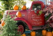 DIY Halloween Decorations / by Karen Cruse