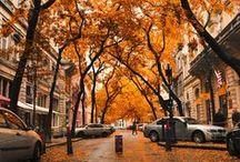 Autumn, Harvest, Fall / Fall Lookbook / by Shelby Lynn D.