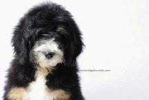 Puppy Stuffs / by Amanda Chapman