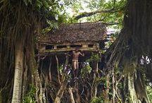 Treehouses / by Jasna Pleho - Studio JASNA KRASNA