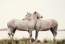 Horse love / by Michele