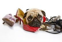 Pet Safety Tips / by PetSave