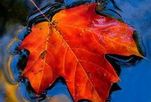 Autumn/Fall / Such a beautiful time of the year. / by Donna Swan