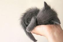 cute / by Semira Kiani