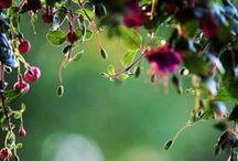 Flowers  / by Stella Shteinbuk