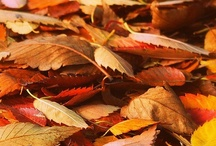 Autumn Colors / by Miguel XdE