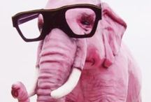 Rosie * Elephants / by Mireya Cotto Aponte