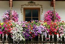 Gardens and Landscaping Ideas / Gardening and Landscaping are a favorite pastime of mine. I love container gardening. And magical garden places.... / by Lynette E.