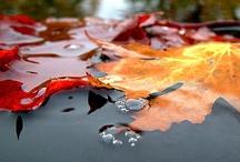 Fall Beauty / by WeatherNation