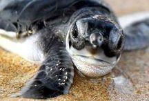Sea Life / by Lynette E.