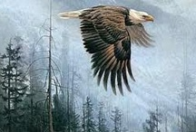 astonishing Robert Bateman / by Eileen Robbescheuten