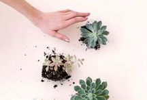 ❘ plants ❘  / ideas for my lil' green space | cacti succu terra / by Beat Ctrl