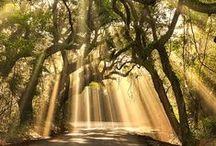 Charleston SC, my southern love  / by Jenny Bec