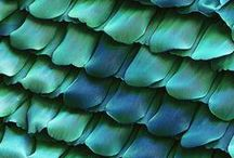 colour, texture, pattern and shape / Only criteria for inclusion? Must be eye-catching / by Celerie .