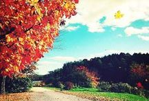 Favorite Fall Getaways / Thousands of tourists flock to witness the spectacle that is fall foliage, when trees burst into splashes of vibrant red, yellow, and orange. Plan your next fall getaway at one of these colorful locations. / by Travel + Leisure