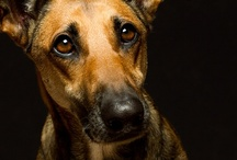"""Dog portraits / It has become clear that the most important """"equipment"""" a good dog photographer needs is a pair of working knees.  All the best dog portraiture is taken at the dog's eye level.  / by Karen Tiede Art Rugs"""