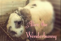 alice the wonder bunny / by Tara Inman