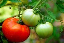Vegetable Garden / by Joyce Dowtin