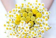 Fleurs jaunes / Aperçu de quelques jolies fleurs jaunes pour la déco florale de son mariage! / by France Fleurs