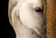 Horses / by Savannah McGinnis