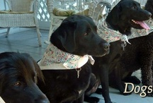 Dogs / Pets are welcome at Oak Grove Plantation bed & breakfast, open May to September / by Oak Grove Plantation Bed & Breakfast