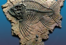 "Fossils / by Patrick Dugan aka ""Clayman"""