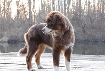 P u p p y / One day I will own a big beautiful dog. / by R a c h e l K i r a n